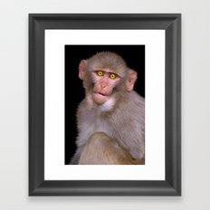 Young Rhesus Macaque Paintover Effect Framed Art Print