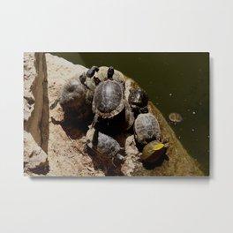 Crowded beach Turtles sunbathing Metal Print