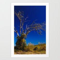 Naked Tree Art Print