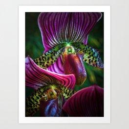 Parrot Petals Art Print