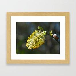 Pussy Willow Flower Framed Art Print