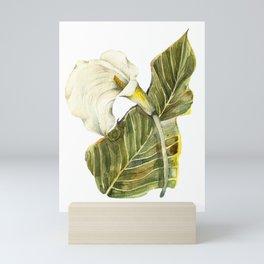 White Calla Lily Mini Art Print