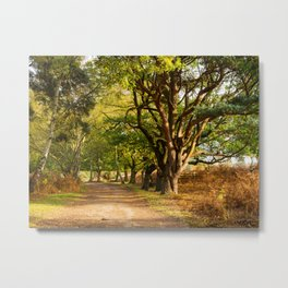 Trail Through the Woods Metal Print
