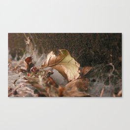 A Spider Place Canvas Print