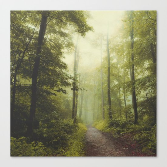 Long Forest Walk Canvas Print