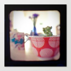 Succulent Tea Cup Canvas Print