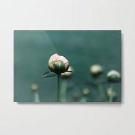Pale Pink Peony on Teal Blue Green Metal Print