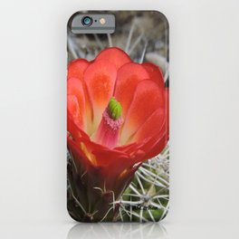 Red Blossom on a Hedgehog Cactus iPhone Case