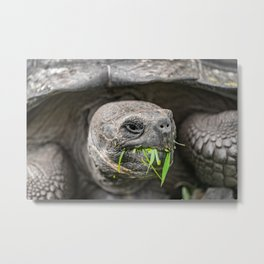 Do I have something in my teeth? Metal Print