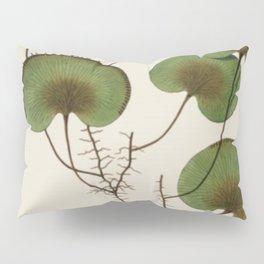 Kidney Fern Pillow Sham