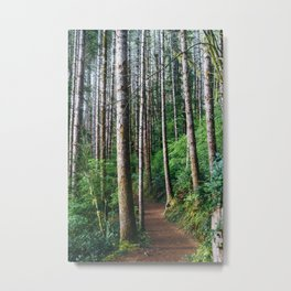 Trees: III // Oregon Metal Print