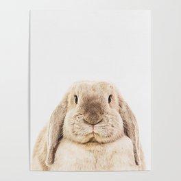 Bunny Rabbit Poster