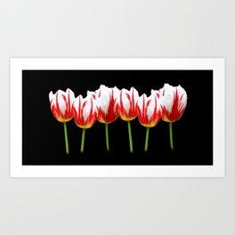 Maple Leaf Tulips on Black Art Print
