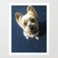 yorkie Art Prints featuring Yorkie by indigo2