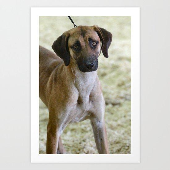 Hound Pup Art Print