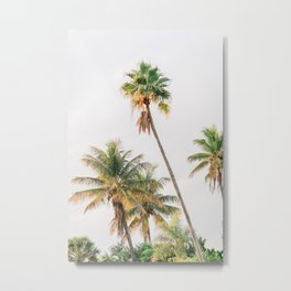 Curvy Florida Palms Metal Print