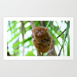 Tarsier Monkey Art Print