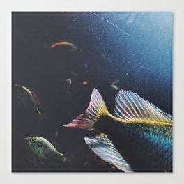fishy celebration Canvas Print