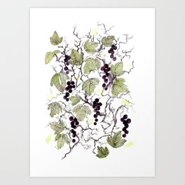 black currant Art Print