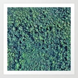 Summer Forest 2 Art Print