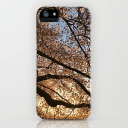 Cherry Blossoms at the Tidal Basin iPhone Case