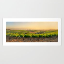 Golden Vineyard  panorama Art Print
