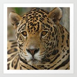 The Jaguar Art Print