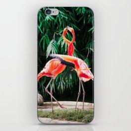 Flamingo Dance (Color) iPhone Skin