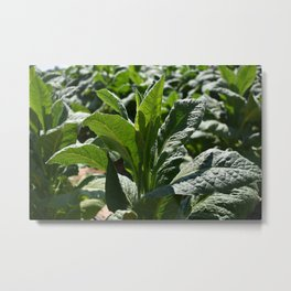 Lush in Green Metal Print