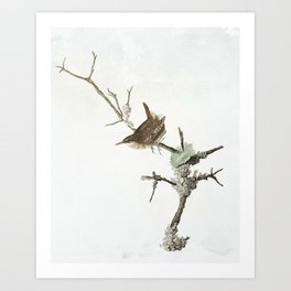 Cheeky Little Wren Art Print
