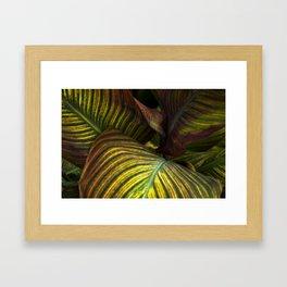Leaf Hideout Framed Art Print