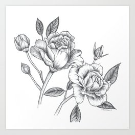 Twin Roses Inked Drawing Art Print