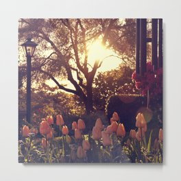 Sunrise Tulips (square) Metal Print