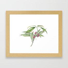 Star Anise Botanical Illustration Framed Art Print
