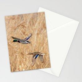 Mallard duck in flight, duck hunting season Stationery Cards