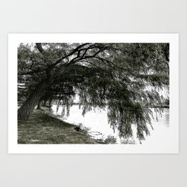 Weeping Willow on the Water Art Print