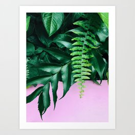pink and foliage ii Art Print