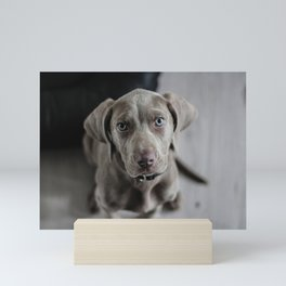 Weimaraner Puppy Dog Mini Art Print