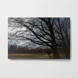 spring trees Metal Print