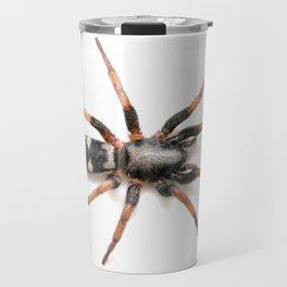 Sergiolus montanus, a stealthy ground spider Travel Mug