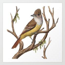 Great Crested Flycatcher (Myiarchus crinitus) Art Print