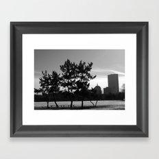 Pine Trees of Boston Framed Art Print