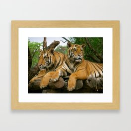 hai der tiger Framed Art Print