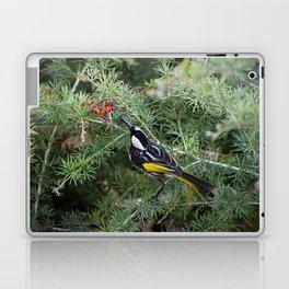 White Cheeked Honeyeater Laptop & iPad Skin