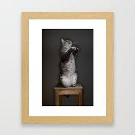 Cat standing Framed Art Print