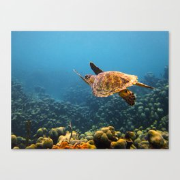 Caribbean Turtle Canvas Print