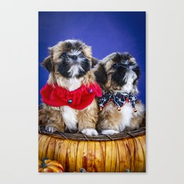 Two Shih Tzu Puppies Wearing Halloween Collars Pose in a Pumpkin Basket Canvas Print