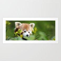Red Panda 4 Art Print