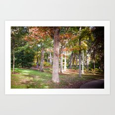 Trees at Wellesley  Art Print