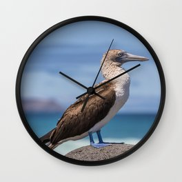 Galapagos blue footed booby bird photography Wall Clock